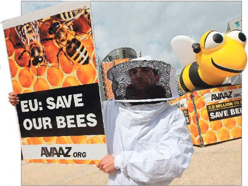 Bildar opinion Biodlare protesterar framför EU:s högkvarter i Bryssel – och nu har de fått som de vill, EU-kommisionen har förbjudit en typ av kemikalier som sägs bidra till bidöden.