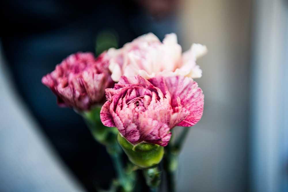 Nejlikorna är på uppgång, främst bland yngre som är på jakt efter en vacker blomma med wow-känsla.