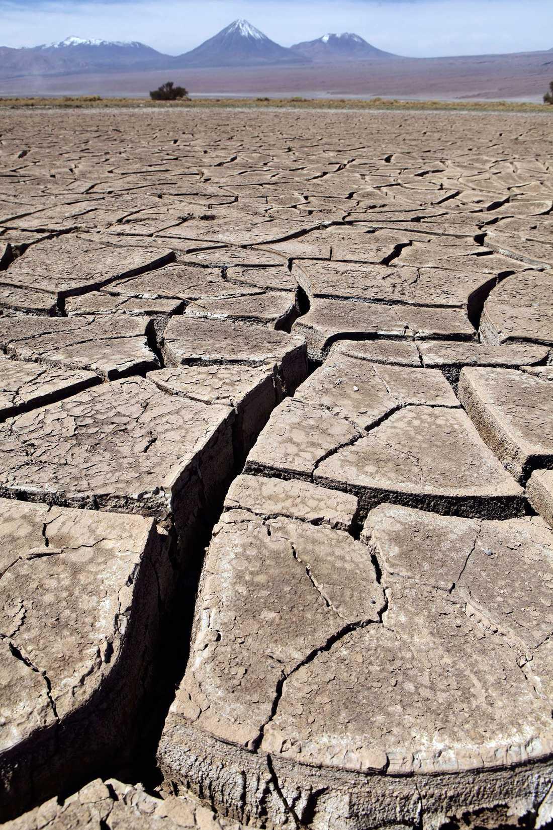 VÄRLDENS TORRASTE PLATS Atacamaöknen i Sydamerika är överlägset torrast på jorden. I snitt faller här 101 millimeter regn – vart tusende år (jo, du läste rätt!).