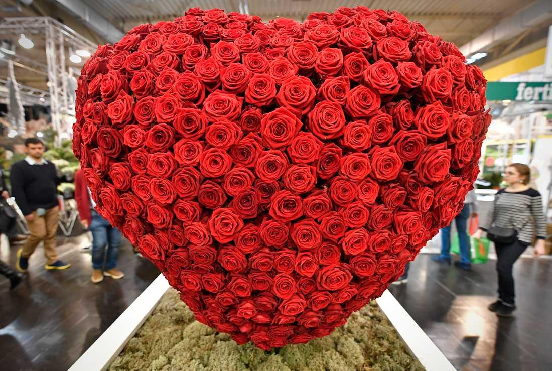 Vem kommer du att uppvakta med rosor?