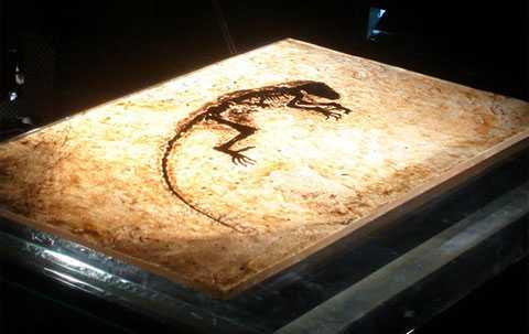 """Paleontologen Lars Werdelin på Naturhistoriska Riksmuseet är besviken på fyndet av fossilet """"Ida"""". Det håller inte vad forskarna lovade tycker han."""