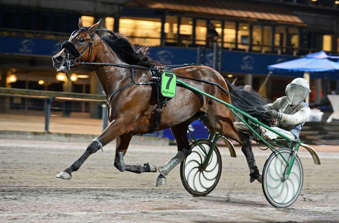 Treasure Kronos är en av fem svensktränade hästar som går ut i Prix de Belgique på söndag. Där kan stoet kvala in till sitt andra raka PdA.
