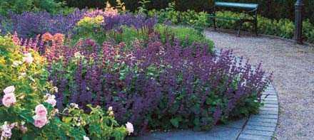 Visst väcks habegäret? Tänk att ha en så här underbar rabatt hemma i trädgården. Följ Dan och Ann-Christin Rosenholms enkla tips och drömmen kan bli verklighet fortare än du tror.