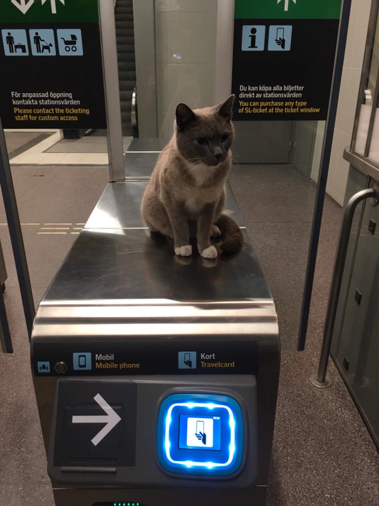 Tunnelbanestationen har blivit en del av katten Catos revir.