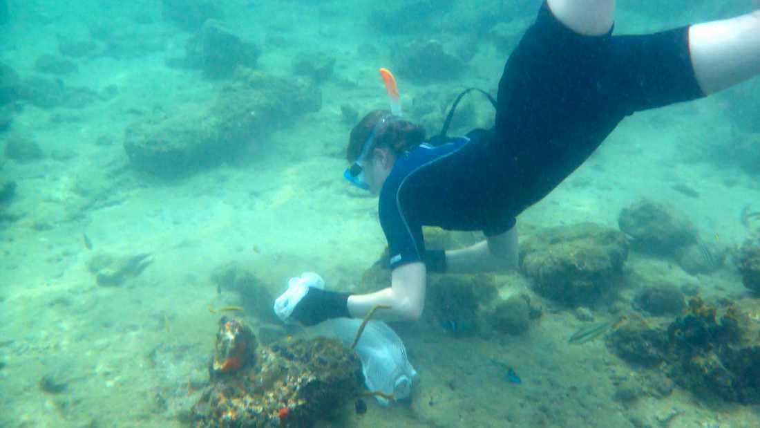 Marinbiologen Lauren Sumner-Rooney samlar in ormstjärnor i vattnen utanför Panama.
